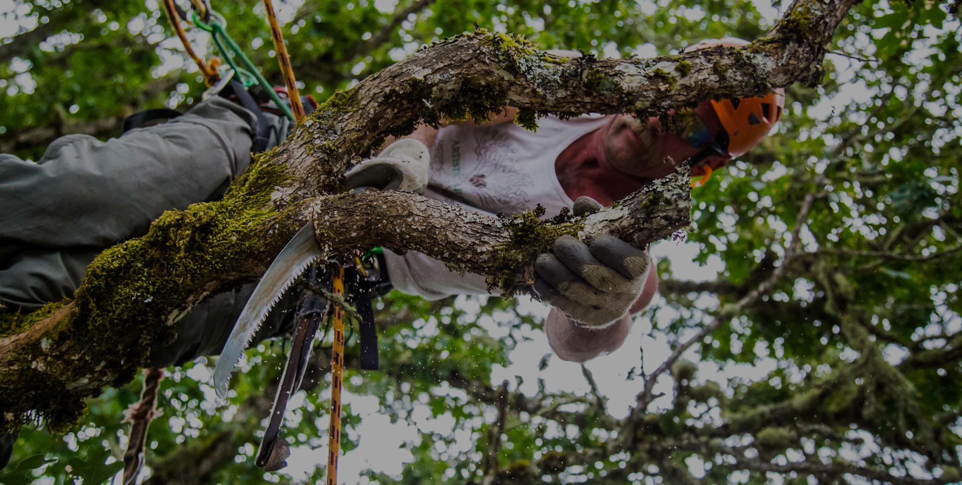 Artistic Arborists in Eugene Oregon