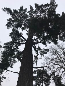 Pruning Eugene's Largest Tree